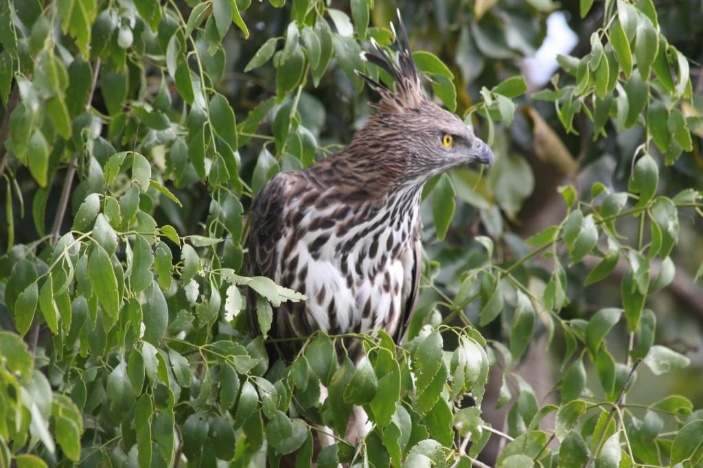 Für Vogelliebhaber ist der Kaudulla Nationalpark ein beliebter Anlaufpunkt