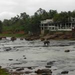 Das berühmte Elefantenwaisenhaus von Pinnewala