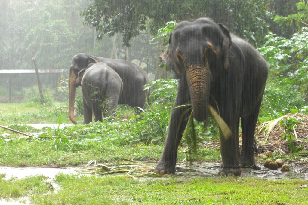 Die Elephant Foundation in der Nähe von Kandy