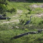 Krokodile trifft man auch in den Nationalparks an