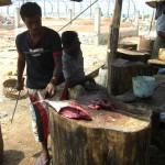 Auf dem Fischmarkt von Negombo