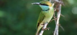 Für Vögel ein ideales Habitat: Bundala Nationalpark